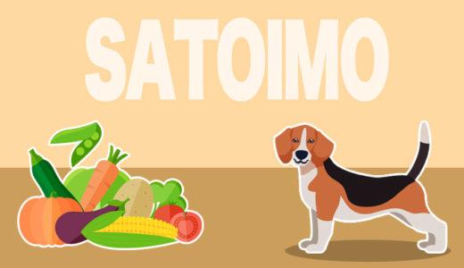 犬は里芋を食べても大丈夫!栄養素や効能・食べさせるときの注意や保存方法もチェック